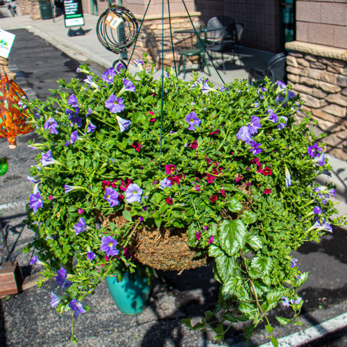 Ahmazing Hanging Baskets