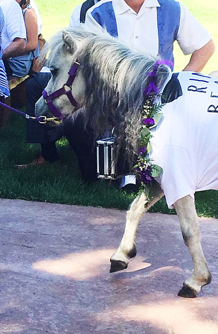 We do it all!! Even flowers for the wedding pony!