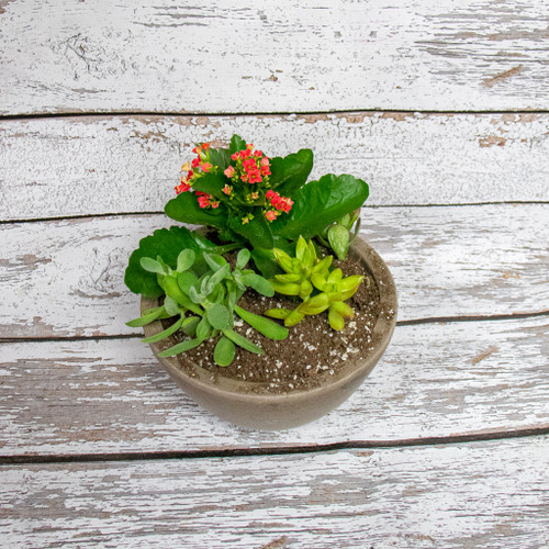 This solid earthy ceramic container filled with outstanding blooming and green succulent plants, is the perfect gift. Everyone can be successful with a succulent garden. Lots of light, very little water.  Care:  1. Make sure your succulents get enough light    Succulents love bright light, warmth and need about six hours of sun per day, depending on the type of succulent. Newly planted succulents can scorch in direct sunlight, so you may need to gradually introduce them to full sun exposure or provide shade with a sheer curtain.   2. Rotate them frequently   Succulents love direct sun, but if yours is sitting in the same exact spot day after day, it's likely that only one side is getting enough light. Succulents will lean towards the sun, so rotating them will help them stand up straight. (Leaning may also be a sign that they need to be in a sunnier spot.)   3. Water according to the season   Just like us, succulents need more energy when they're in a period of growth. During the spring and summer, the plants are thriving and drinking up much more water than when they're resting in the fall and winter. Don't forget to water the leaves of your succulent as that is how it absorbs the majority of its water. Test the soil with a finger—when the top 1.25 inches are dry, grab your watering can. Overwatering can kill your succulent, so make sure you let the soil very dry between watering.   4. Choose a container with drainage   Succulents don't like to sit in waterlogged soil, so drainage is important to prevent rot. Your container should have a drainage hole to allow excess water to escape. Terra-cotta pots are ideal for beginners. If you can not supply a drainage hole, packing peanuts or rocks are the perfect way to add drainage to any pot!