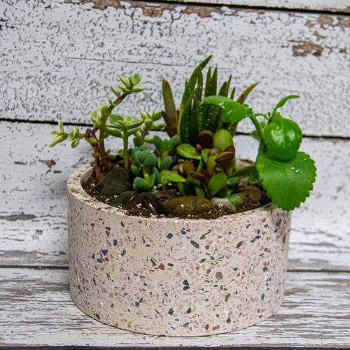 Tranquil Succulents Planter (Large)