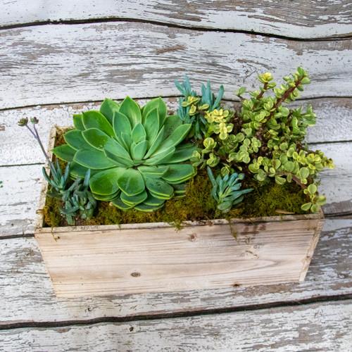 Giant Rustic Succulent Box