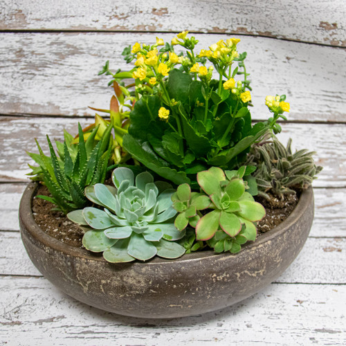 Giant Blooming Succulents Planter