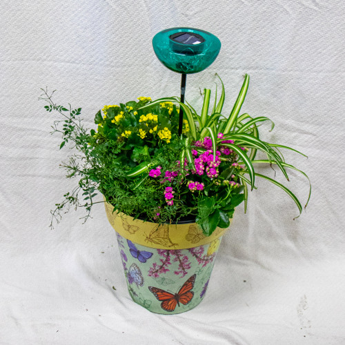 Get this beautiful medium sized Studio M Art Pot filled with fun plants and this fun solar powered garden stake that you can keep in the pot or put out in your yard! Let us choose a fun pot for you and dress it up with the perfect seasonal plants!