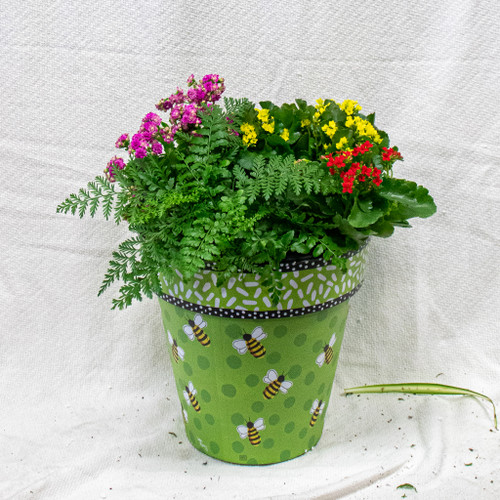 This beautiful Bee themed pollinator pot filled with seasonal flowers!