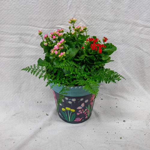 This beautiful small Studio M Art Pot is filled with fun seasonal flowers and plants.
