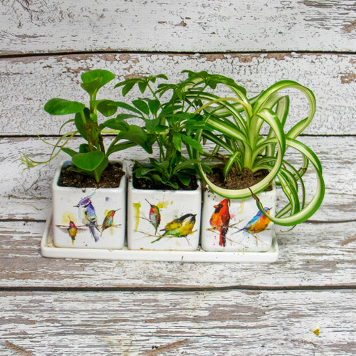 Water Colored Birds Planter