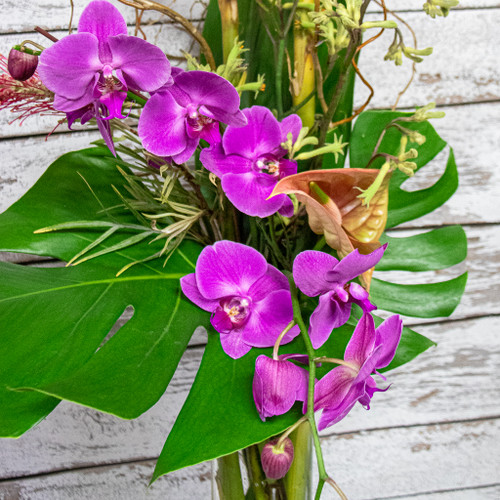 Ginger Orchids Tropical Arrangement