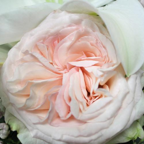 Mauve and Blush Cascade Bouquet