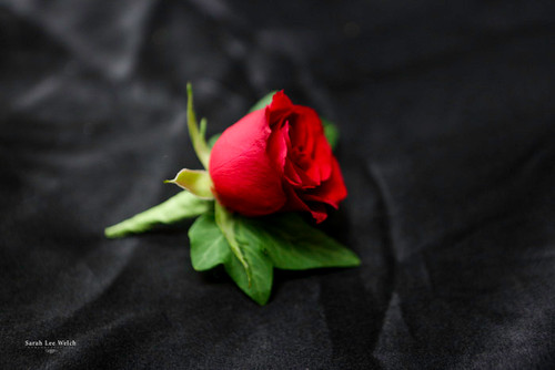Red Rose - Single Boutonniere