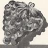 Crochet Grapes Potholder Pattern, Vintage 1960s