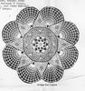 Star Crocheted Doily Pattern, Fan Border, Needlework Bureau E-1102