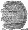 Pineapple Rose Chair Back Pattern Illustration, Mail Order 1295
