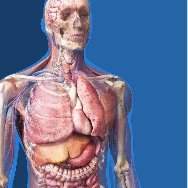 Head to Toe Anatomy Trivia Category