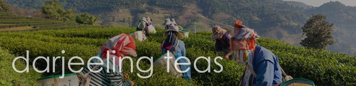 Darjeeling Teas from Jenier World of Teas