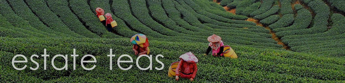 Single Origin Teas from some of the most renowned Tea Estates