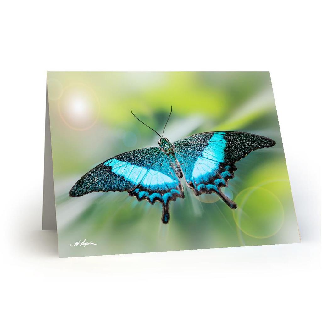 Butterfly 3 - HP100