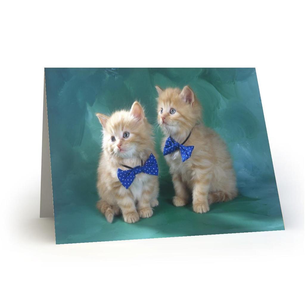 18L06Kitty Cats