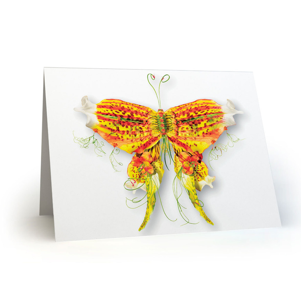 Butterflies 06 - MT100
