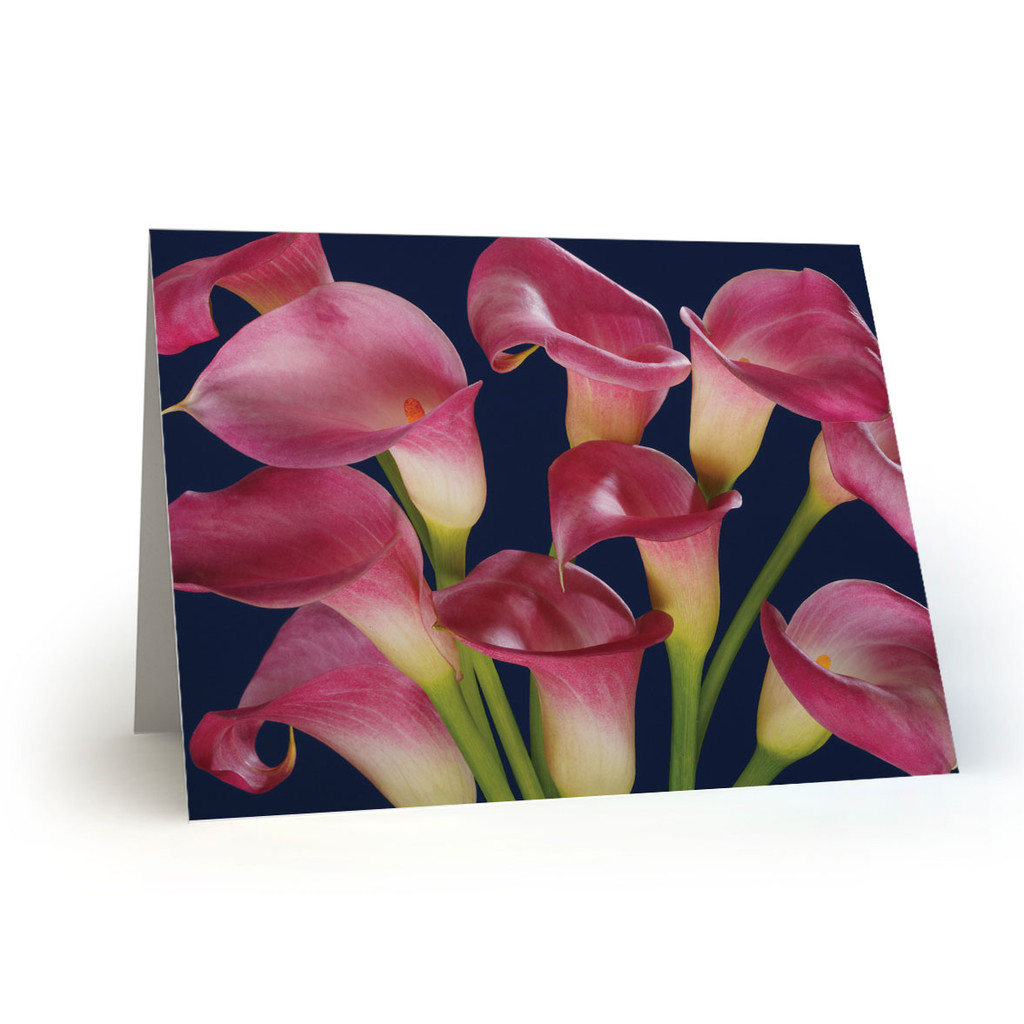 Calla Lillies - MT100