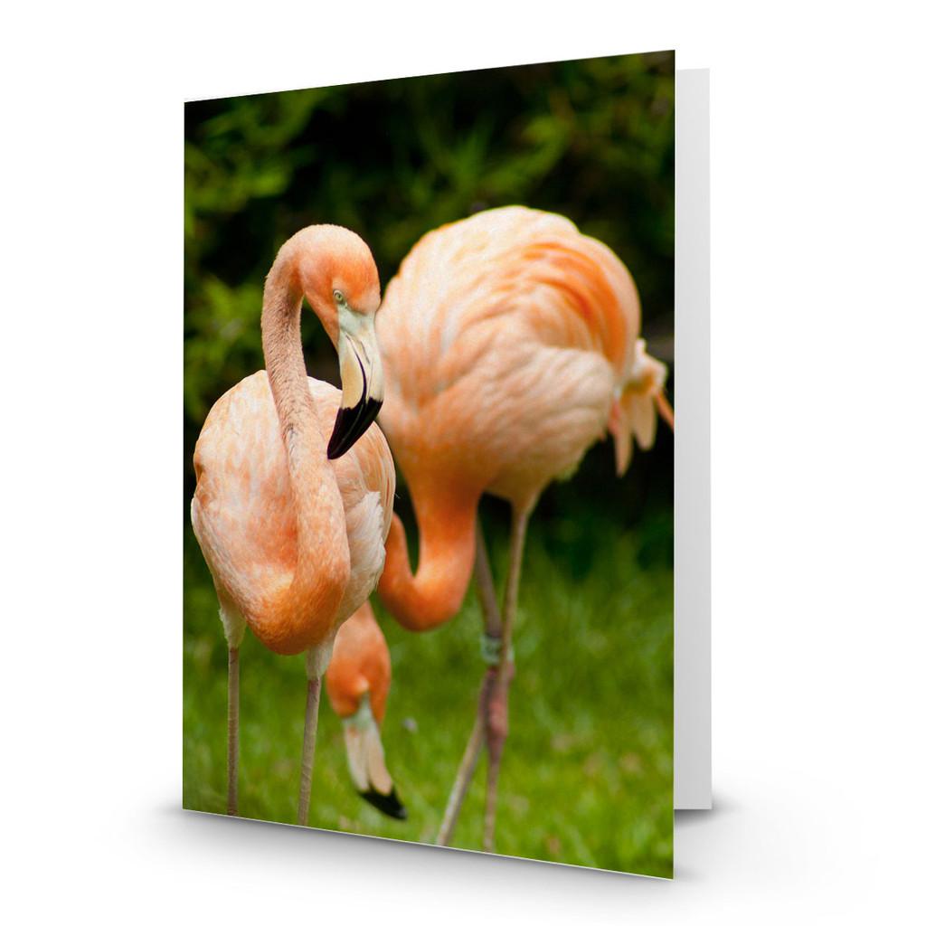 Animals Flamingo Pair - CC100