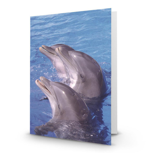 3 Dolphins Wating