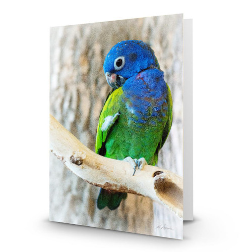 Parrot 1 - HP100