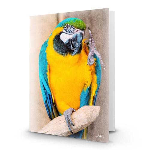 Parrot 2 - HP100