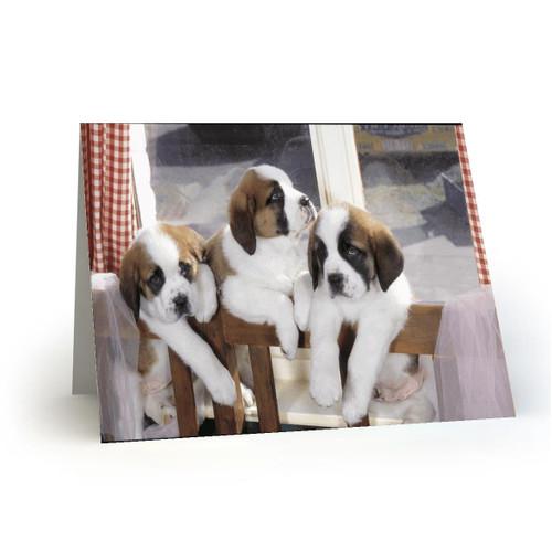 3 St.Bernard puppies