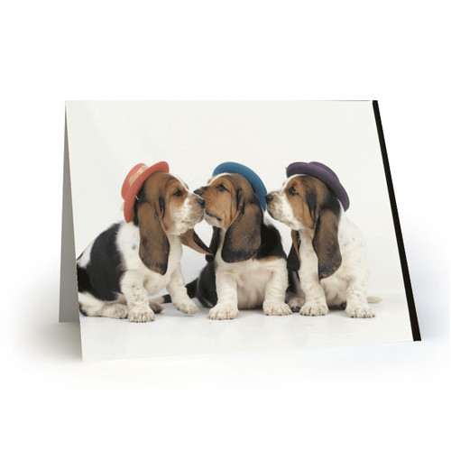 3 DOG DAY