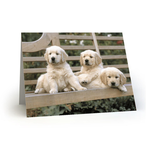 3 Puppies Labrador