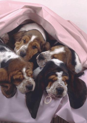 BLANKET DOGS