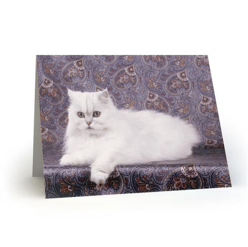19L17 Kitty Cats
