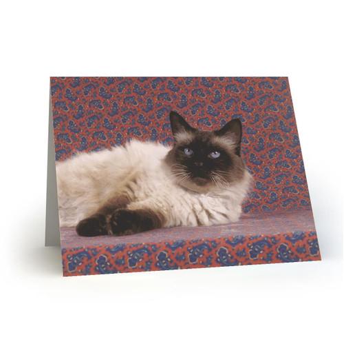 19L18 Kitty Cats
