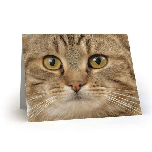19L20 Kitty Cats