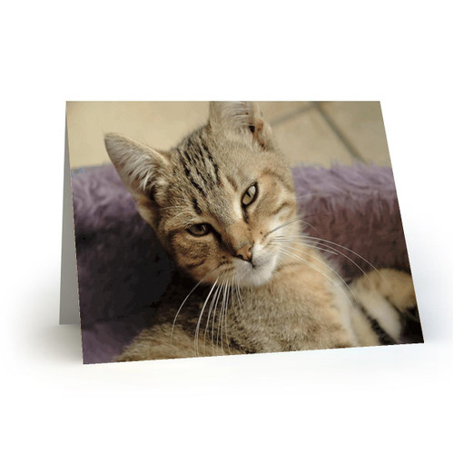 19L24 Kitty Cats