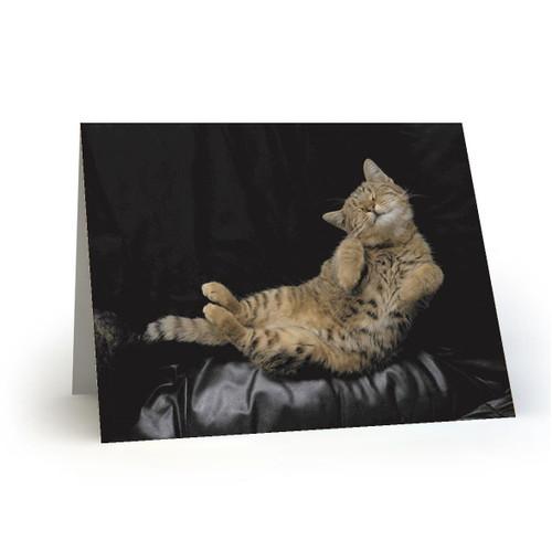 19L25 Kitty Cats
