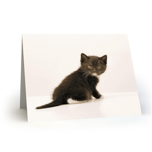19L26 Kitty Cats