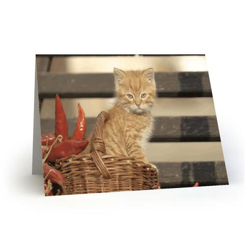 19L30 Kitty Cats