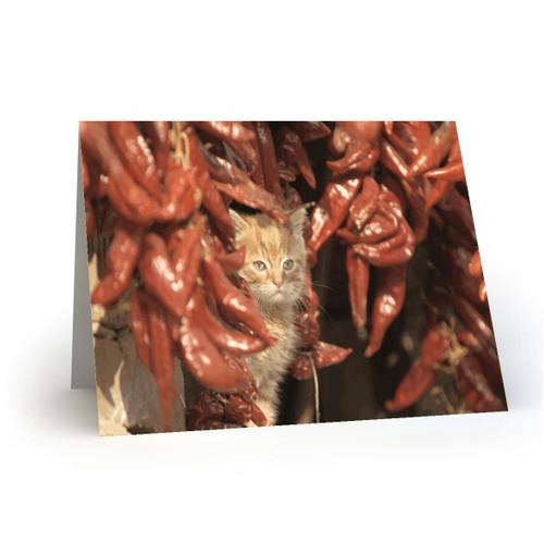 19L31 Kitty Cats