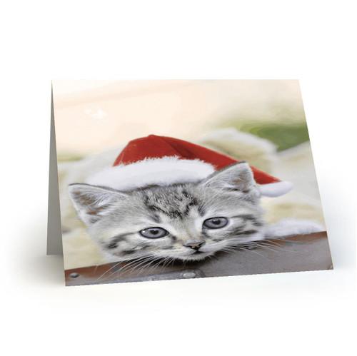 19L34 Kitty Cats