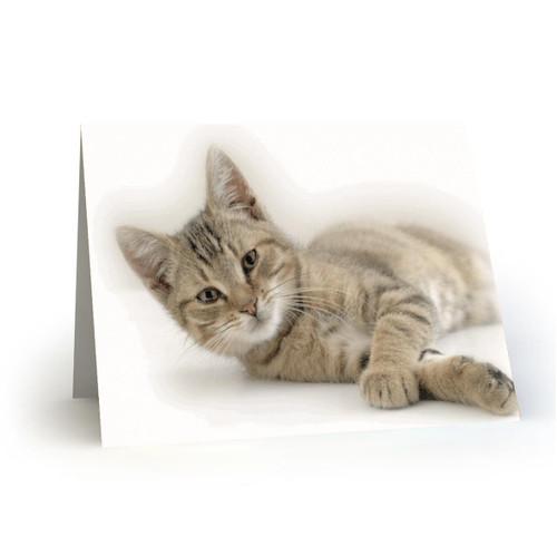 19L38 Kitty Cats
