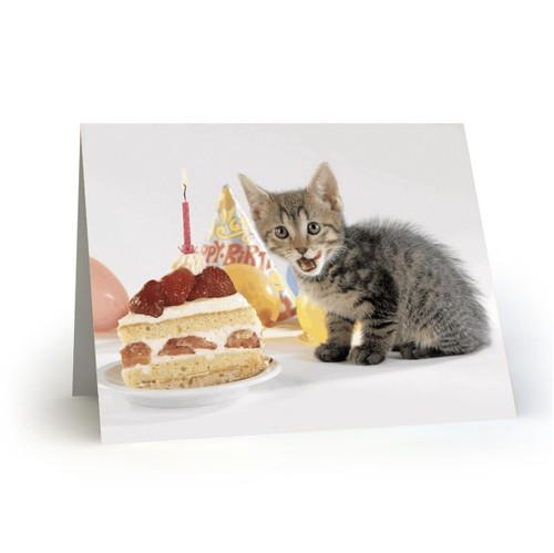 19L40 Kitty Cats