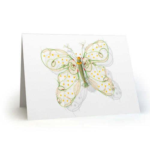 Butterfly 07 - MT100