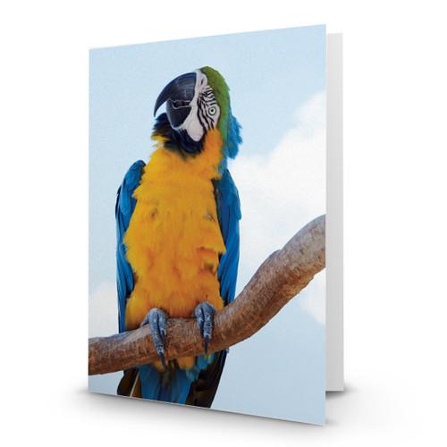 Parrot - MT100