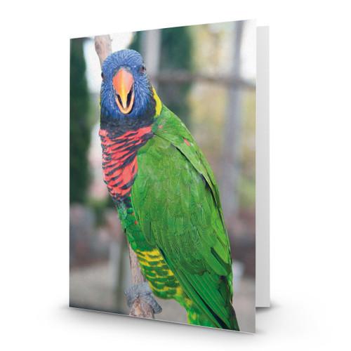 Bird Lorikeet Looking at You - CC100