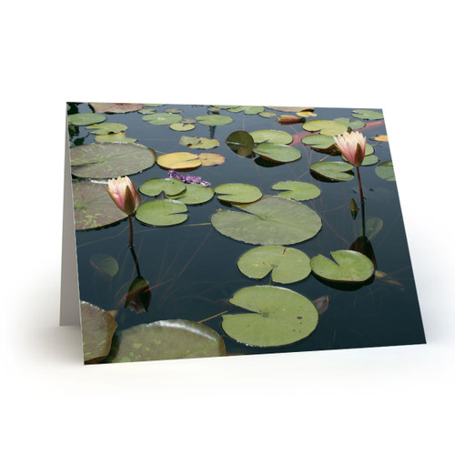 Lily Pads and Blooms - CC100