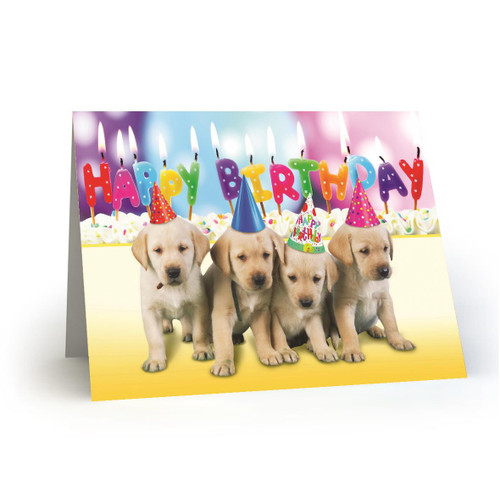 4 Birthday Pups