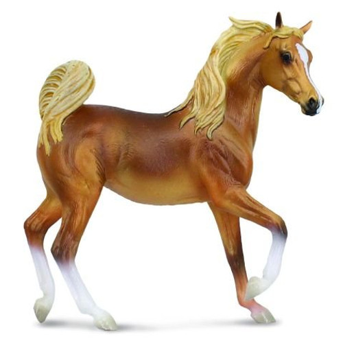 Golden Chestnut Arabian Mare