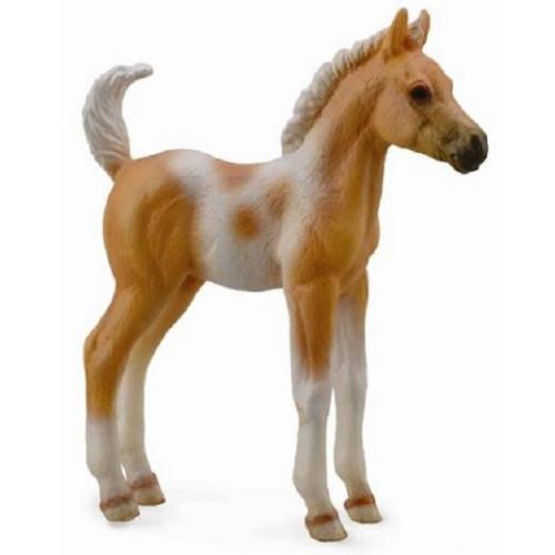 Pinto Foal