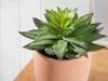 Echeveria Artificial Plant